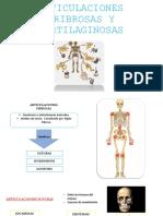 Articulaciones Fibrosas y Cartilaginosas