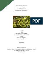 Dragon Scale Ferns