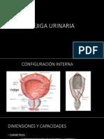 Agentes Causales de La Angiomatosis