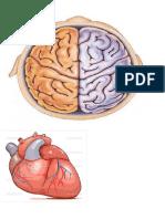 Partes del Cuerpo.doc
