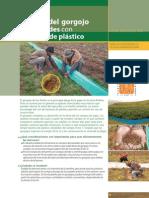 Control del gorgojo de los Andes con barreras de plástico