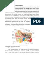 Anatomi Telinga Dan DIAGNOSIS OMSK
