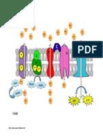 Electron Transport Chain Diagram