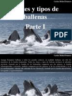 Carlos Michel Fumero - Clases y Tipos de Ballenas, Parte I