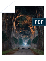 Tunnel of Trees Natural Park Migliarino San Rossore, Pisa, Italy