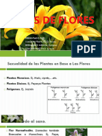 Tipos de Flores - Ppt Exposicion