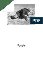 Dinosaur fossils.ppt