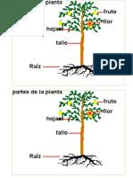 Partes Planta