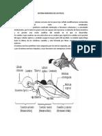 Sistema Nervioso de los Peces