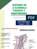 Tiroides anato
