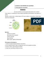 Protocolo7-Estomas