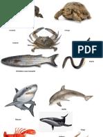 Animales de Rios, Lagos y Mar