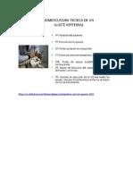 HVLA Chiropractic Technique Cuadrante Superior QUIROUCEN Mcs24oct20181036