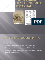 PPT REPRO