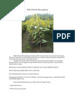 MANTAP..!Hp/Wa 0822-2022-8118, Jual Durian Musang King, Bibit Durian Musang King Siap Buah,