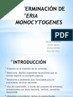 Determinación de Listeria Monocytogenes.pptx