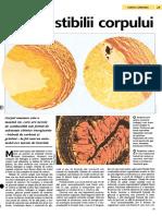 Combustibilii corpului.pdf
