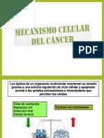 Mecanismo Celular Del Cancer Listo