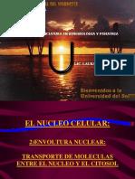 biologia - Envoltura Nuclear.transporte