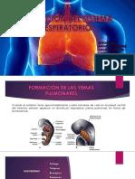 Formación Aparato Respiratorio Expo-.Pptx-1