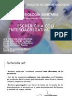 e.coli Enteroagregativa