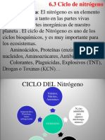 2. Ciclo Del Nitrogeno(1)