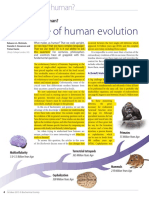 A Timeline of Human Evolution