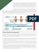 La Aeroponía Es Un Sistema de Cultivo de Plantas Que Ofrece Muchas Ventajas Para El Cultivo Del Chile