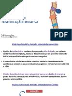 Ciclo de Krebs e Cadeia respiratória.pdf