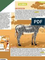 la zebre