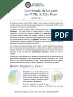 Guia Para El Estudio de Los Pares Craneales y Plexo Cervical