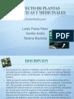 Proyecto de Plantas Medicinales