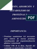 Proteínas- metabolismo