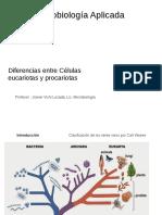 Diferencias entre procariotas y eucariotas
