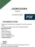 Mel i Agri Cultura