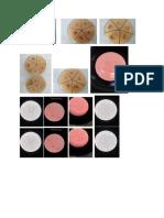 Gambar Praktikum Parasit Bakteri Dan Hematologi