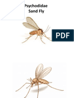 Psycholidae Sand Fly