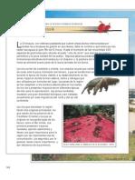 Biodiversidad08C