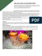 Cum Sa Ingrijesti Cactusii Corect