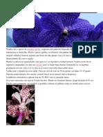 SPECII PLANTE.pdf