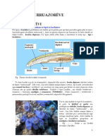 Biologjiabotaerruazoreve Gjitaret 140520134731 Phpapp01