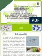 p3 hongos ambientales