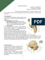 08 - Anatomia II - 18.01.2017 - R.pdf