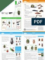 invertebrates guide