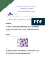 LABORATORIO  BIOLOGÍA 6 MITOSIS DE CÉLULAS DE CEBOLLA