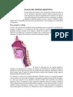 Fisiologia del ser humano