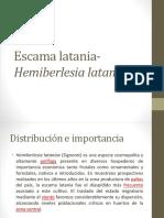 Hemiberlesia lataniae