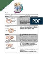 Bio F4 Chap5 Cell Cycle