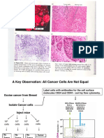 Bio 34 Cancer Stem Cells