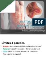 Anatomia Region Inguinal
